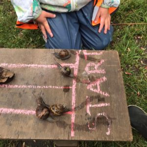 snails on a plank with the word start behind them