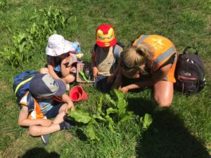 wild about play outdoor nursery forest school foraging learning skills putney sw london september