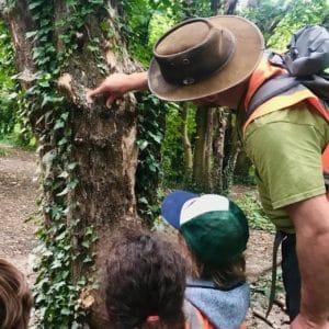 Hollow Tree Adventure Walks Wild about Pla Outdoor Nursery Forest School Putney